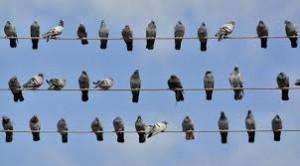 Applis pour detecter les chants des oiseaux, applis mobiles, Mushroom COnseil, Chasseurs de têtes