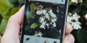 Applis pour detecter les fleurs, applis mobiles, Mushroom Conseil, Chasseurs de têtes